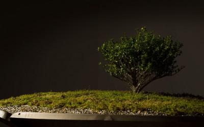 《Parabolic Garden ROBO》展示(2)<br>西宮市大谷記念美術館 2013年度新収蔵作品